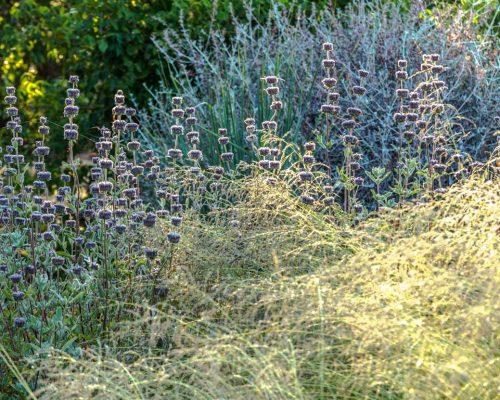 g.il mandorleto, salvia clevelandii, eragrostis curvula